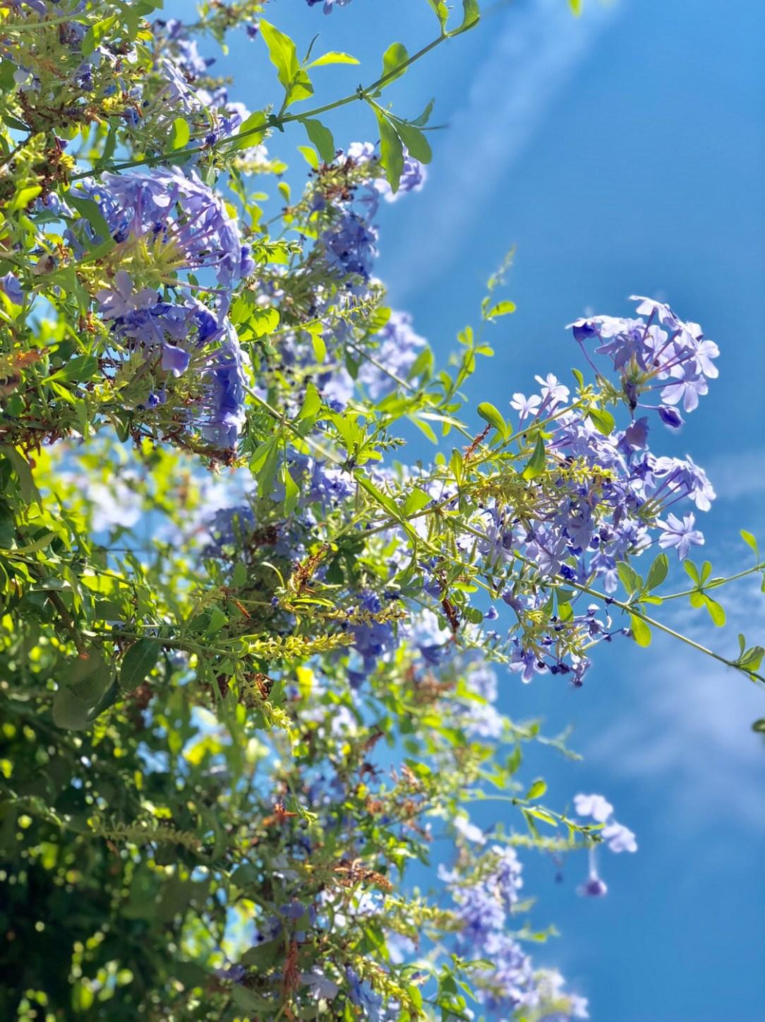 Quinqua, 50 ans, lundi soleil, sunny monday, bleu