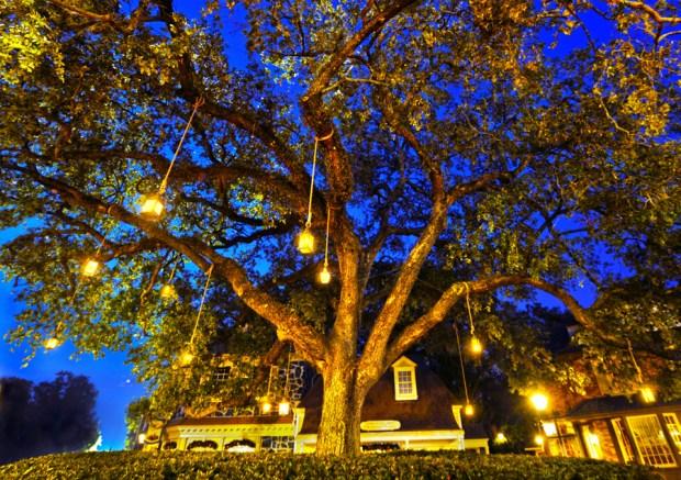 Liberty Square fun facts liberty tree