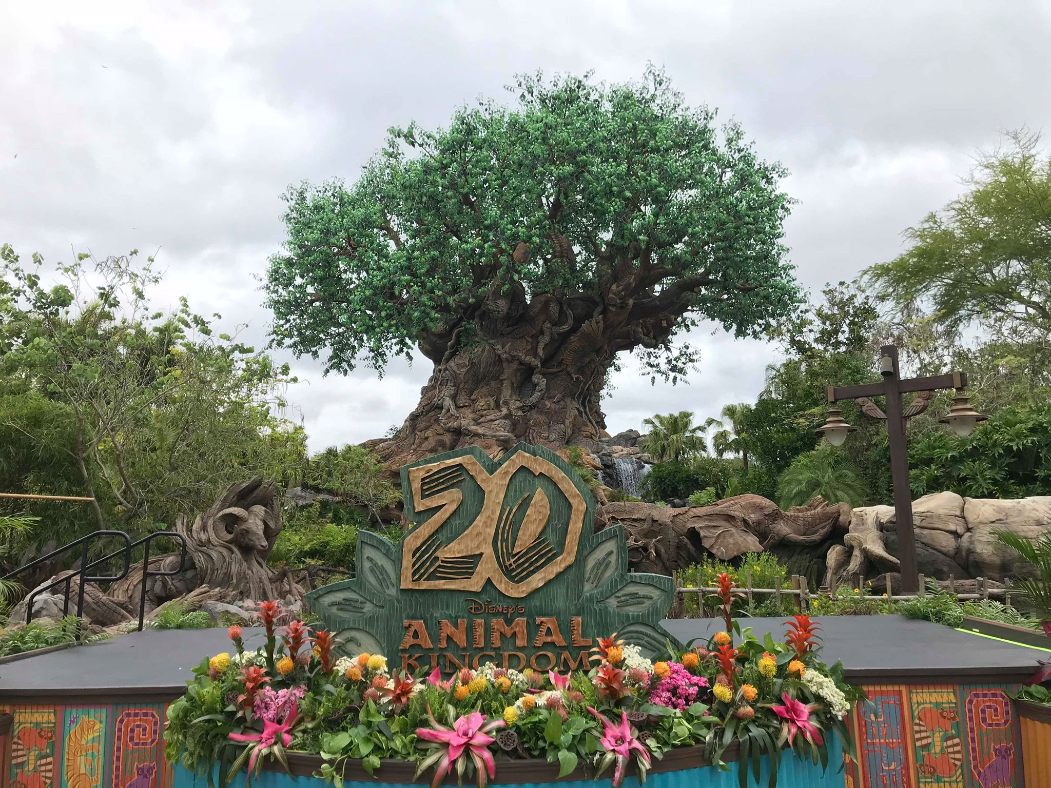 """Featured image for """"Celebrating the Animal Kingdom 20th Anniversary"""""""
