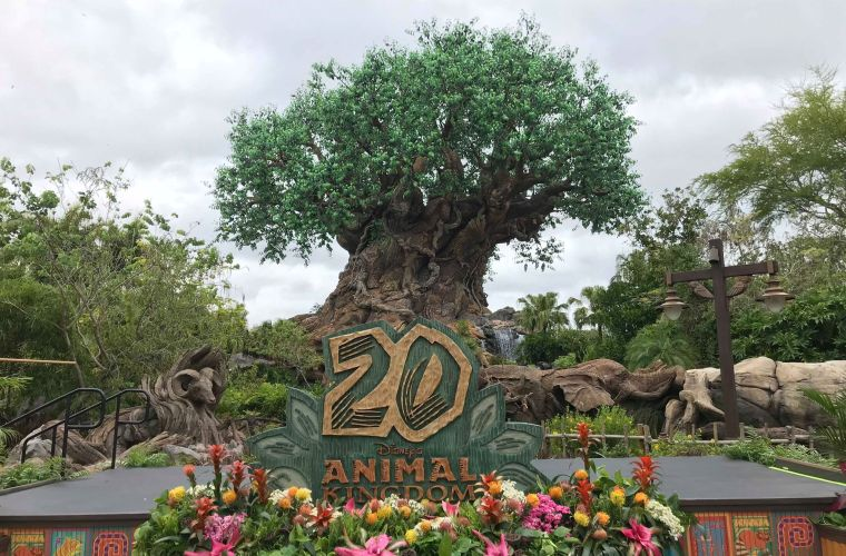 Animal Kingdom 20th