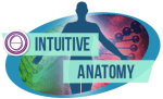 intutive-anatomy