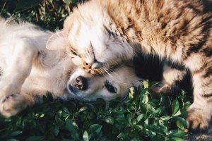 Pets will reward you if you decide to move to pet-friendly neighborhoods in San Francisco.