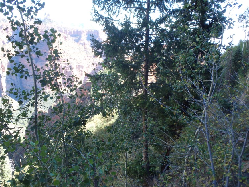 The steep gully, with more forgiving pines.