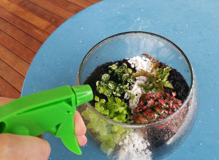 water a terrarium