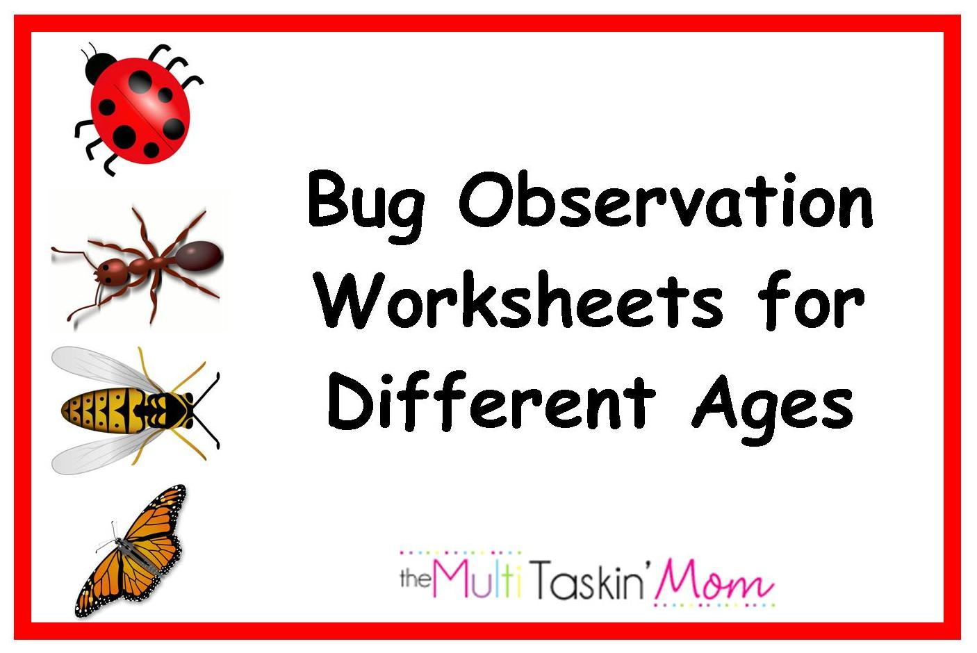 Bug Insect Observation Activity For Multiple Age Groups