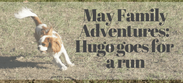 May Family Adventures - the great chase edition