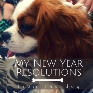 My New Year Resolutions