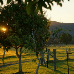 surrounds farmstay