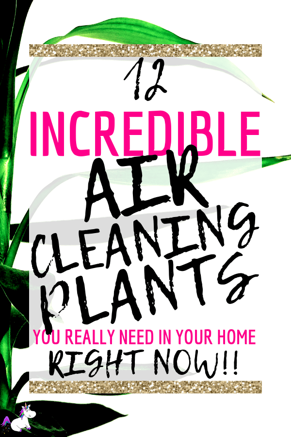 12 Air Cleaning Plants You Need In Your Home   Interior design   Air purifying plants   Indoor plants   Houseplants that clean air decor   houseplants decor   houseplants non toxic   housplants safe for cats   Via: https://themummyfront.com #themummyfront.com #houseplants #healthtips #healthyliving #houseplantssafeforcats #lowlighthouseplants