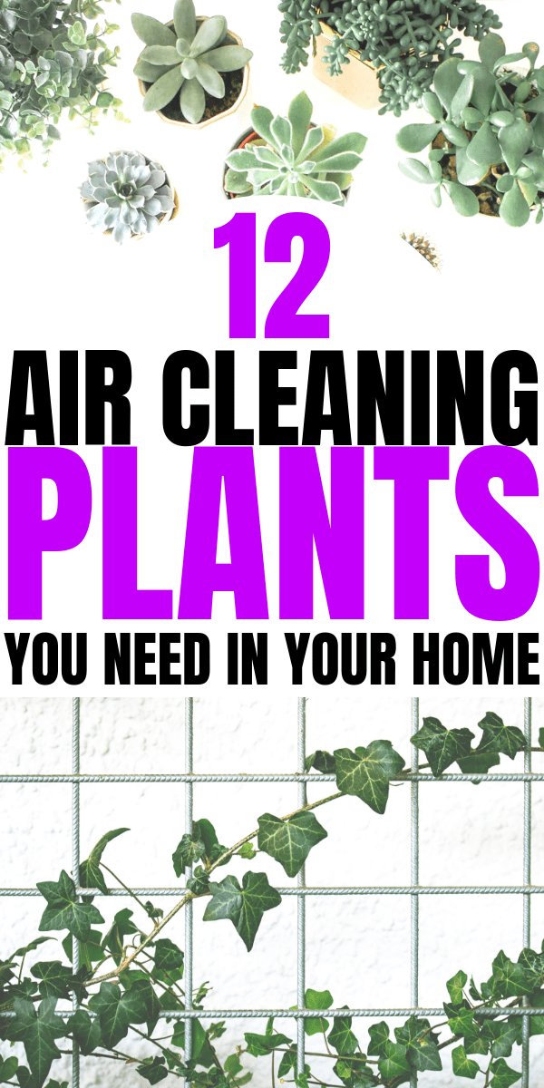 12 Air Cleaning Plants You Need In Your Home   Interior design   Air purifying plants   home decor inspiration   Houseplants that clean the air   Via: https://themummyfront.com #themummyfront.com #houseplants #healthtips #healthyliving #plantcare