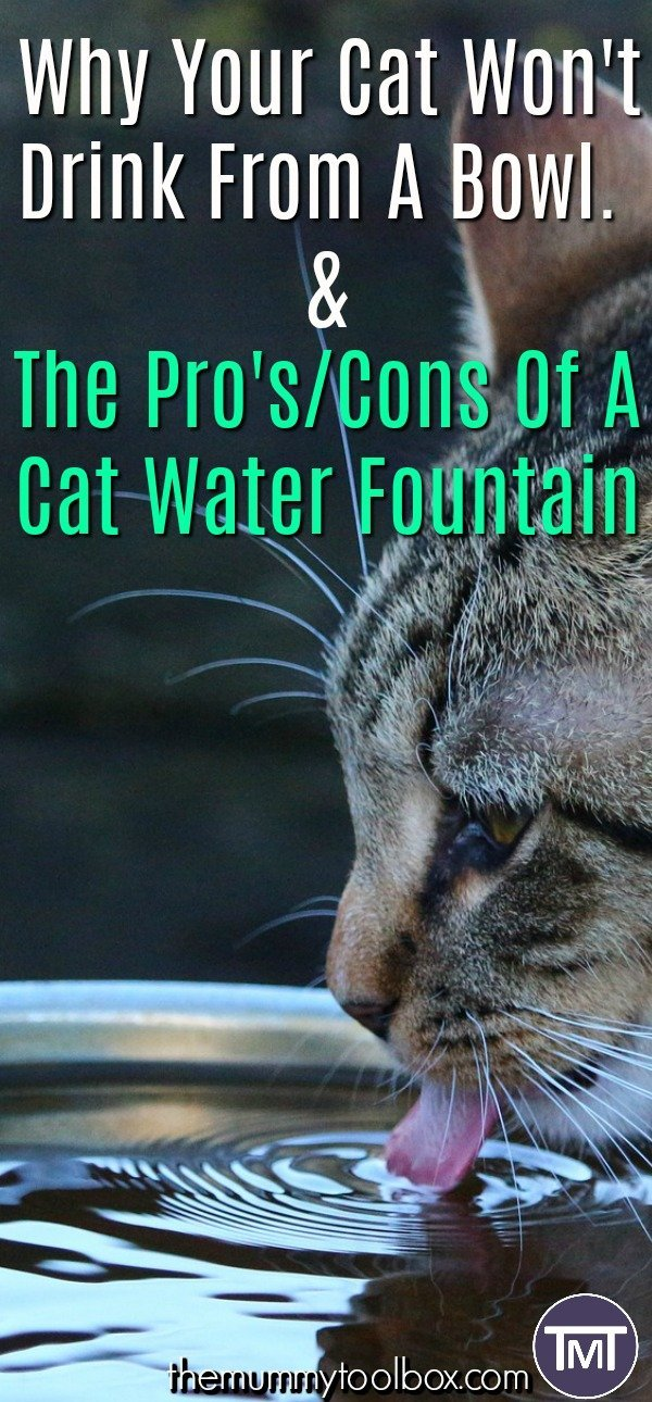 The reasons why your cat won't drink from a bowl as well as the pros and cons of a cat water fountain