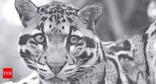 Villagers catch leopard cub in north Kashmir