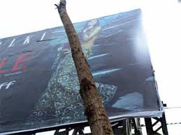 Govt bans installation of hoardings on Chinar trees