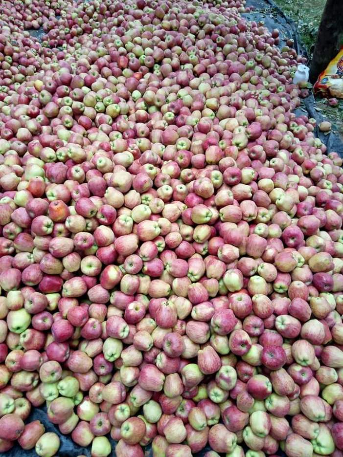 Cold storages in Kashmir lying empty without apples this year