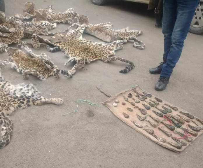 Leopard hides, musk deer pods, bear gallbladders recovered in south Kashmir