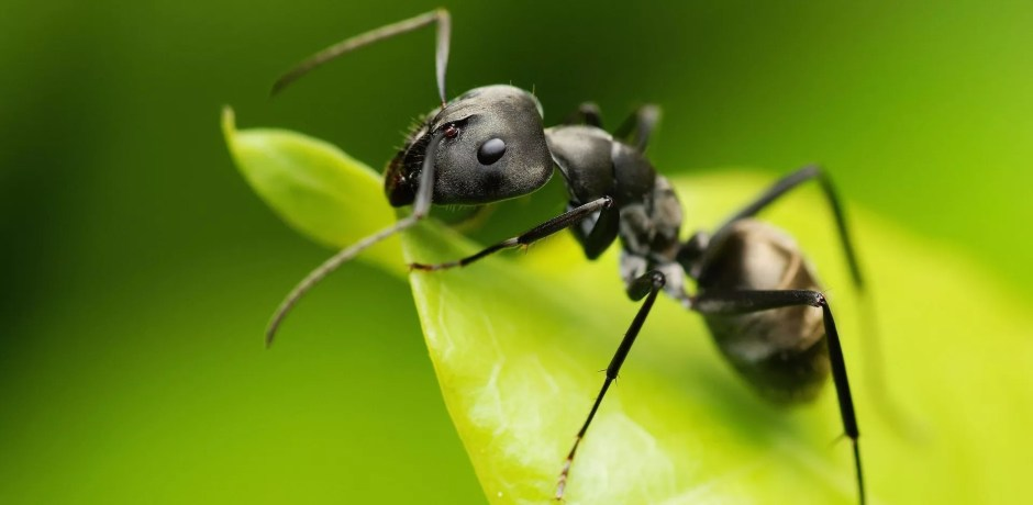 Animals In The Holy Quran The Ant