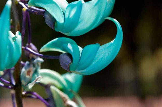 flores raras e lindas