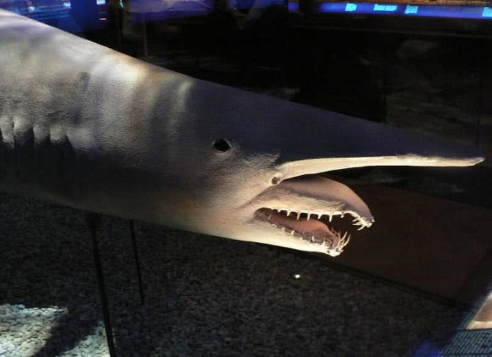 criaturas incríveis do oceano profundo