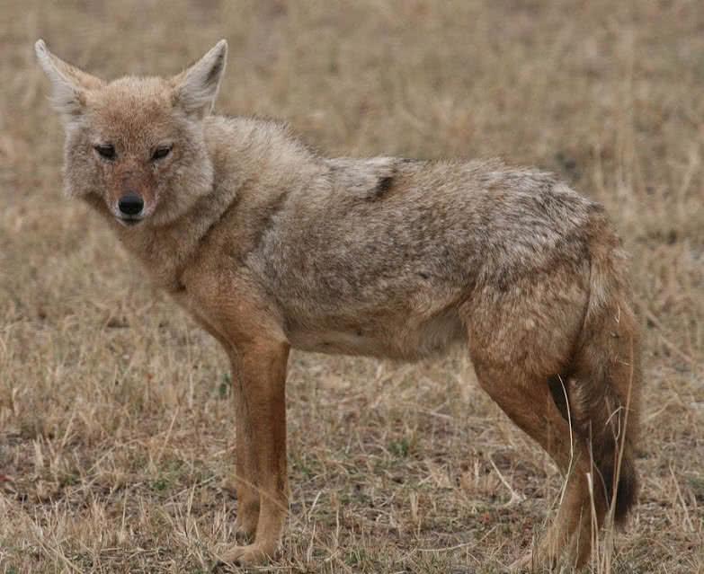 Top 10 Amazingly Adaptive Sahara Desert Animals The Mysterious World