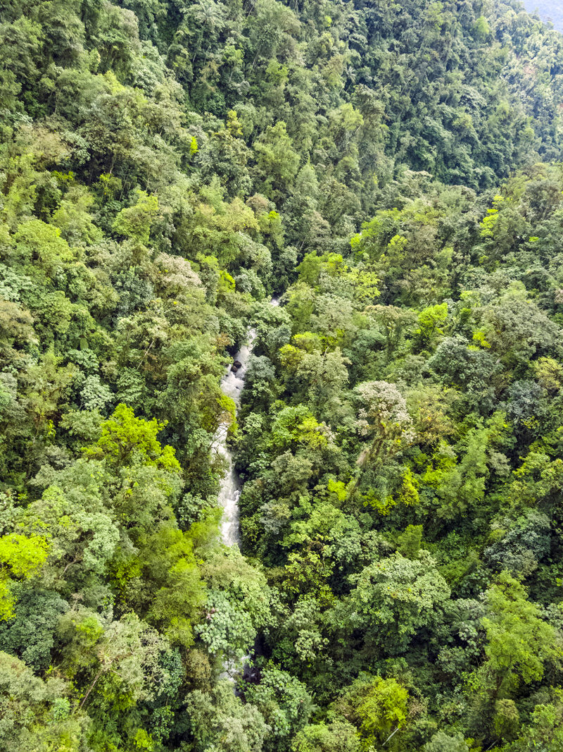 mindo-nambillo cloud forest