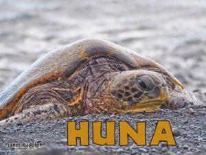 Green Sea Turtle from the big island of Hawaii