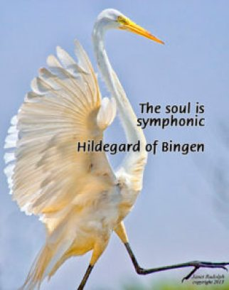 Dancing Heron - Janet Rudolph photography