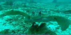 Sea Turtle-4