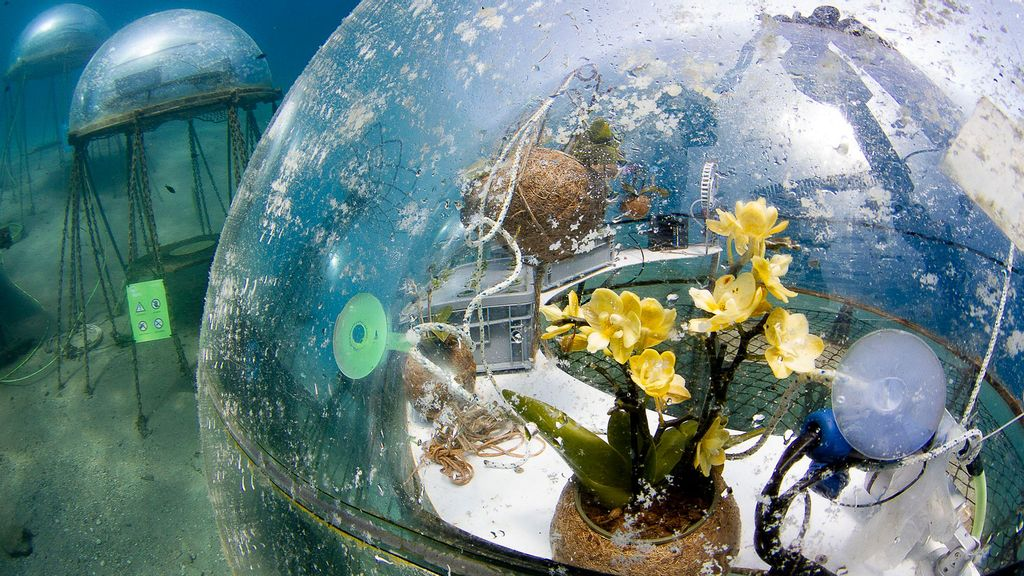 A view inside an underwater biosphere of Nemo's Garden. The plant grows in a carefully monitored environment near the botton of the sea floor in the Mediterranean. (Emilio Mancuso/Zenger)