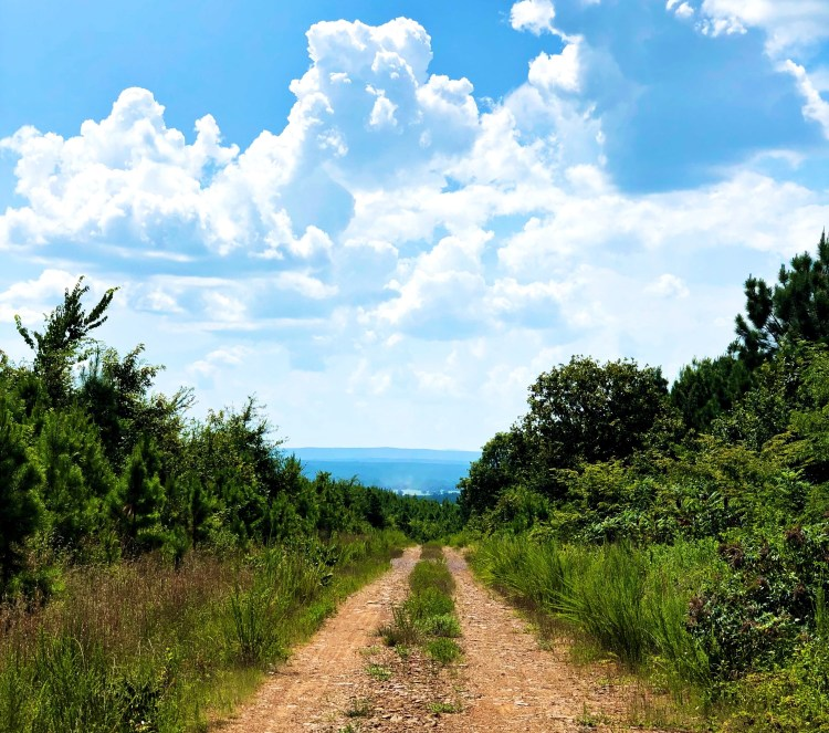 Dirt Road in Ouachita National Forest