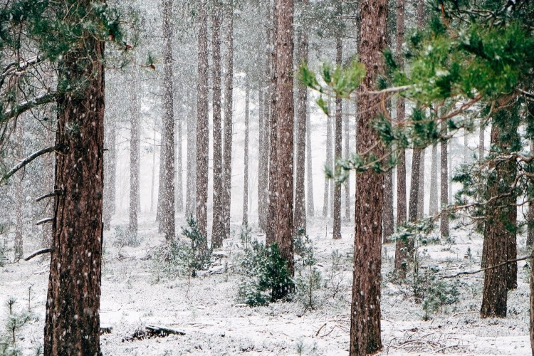 Snow in a forest - the weather in Modoc National Forest can be unpredictable!
