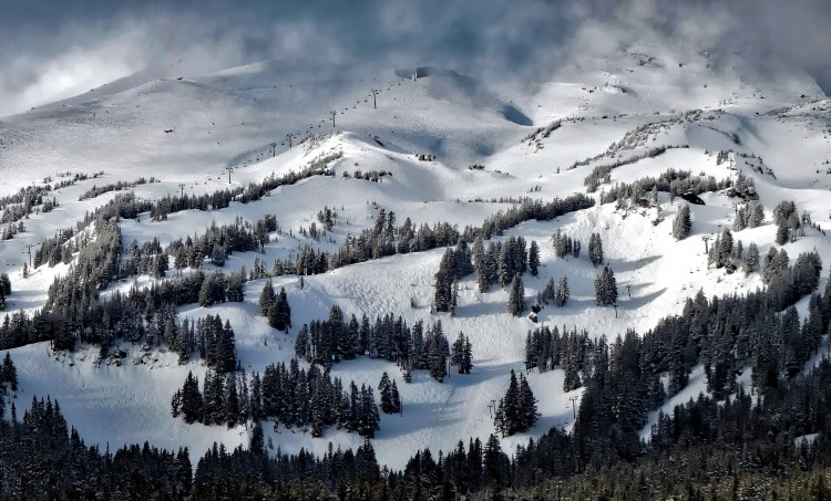 A ski slope among pine trees - Stanislaus National Forest has two great ski resorts.