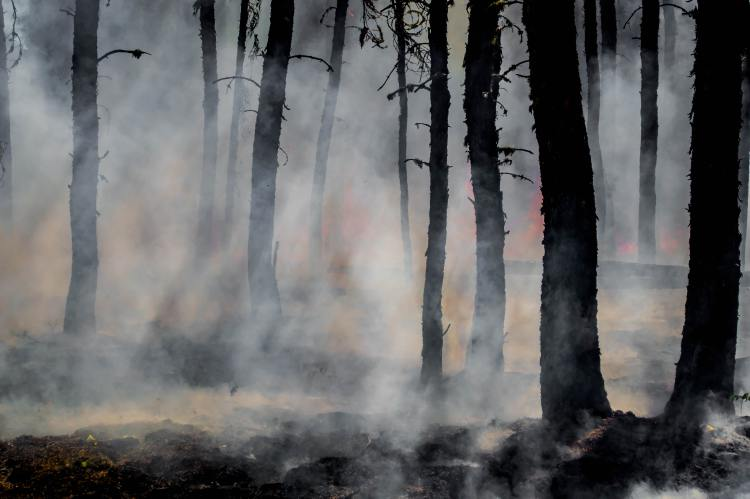 a forest filled with smoke-much of Ocala National Forest has evolved to live with wildfire