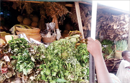 Recession hurting us too, herb sellers cry out