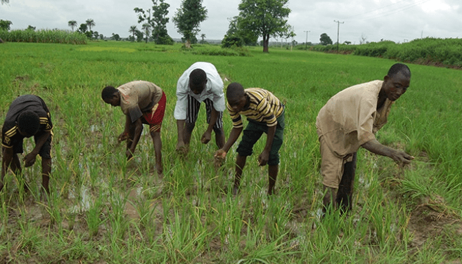 Farmers' group seeks increased agric investment - The Nation Newspaper