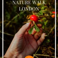 Our Recommended Foraging Experience in London - The Wild Food & Nature Walk