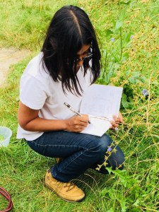 Foraging Experience in London