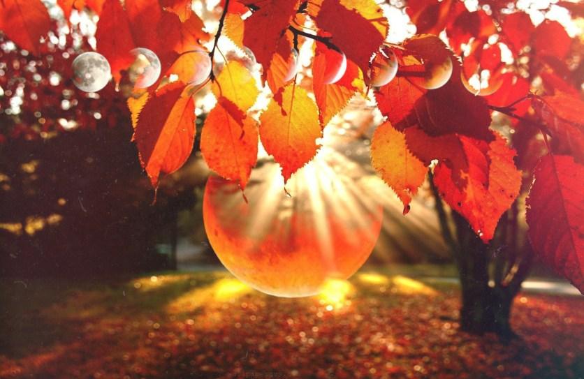Fall-Nature-HD-Wallpaper-2