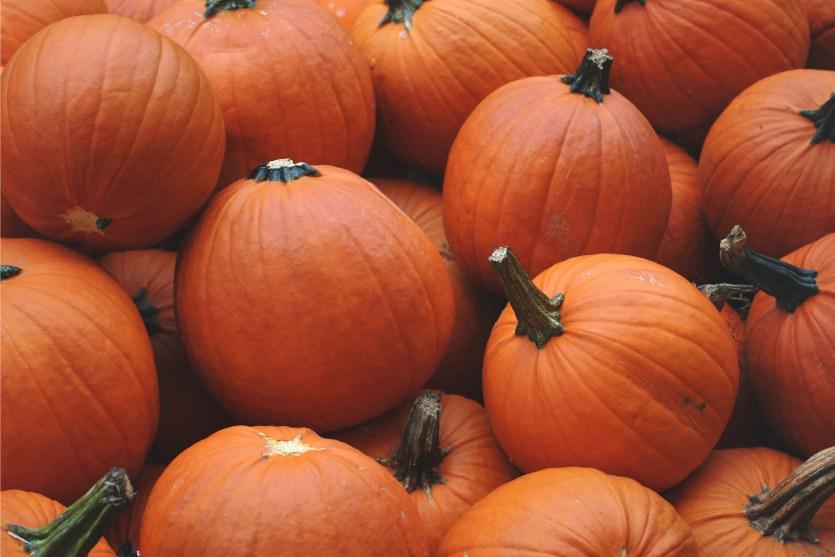 Fall 013