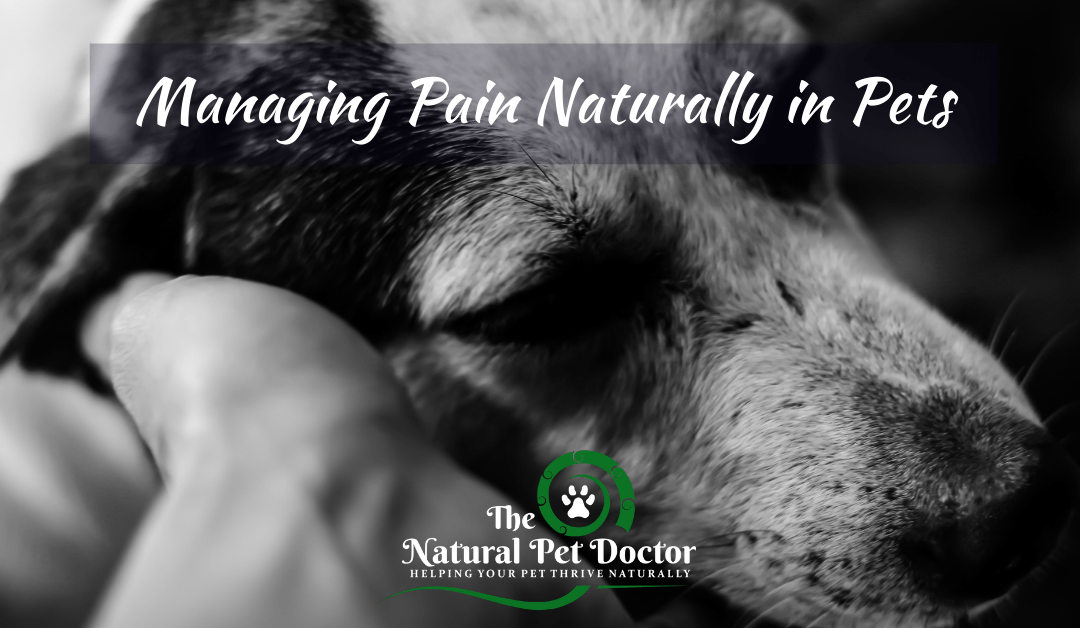 How To Use Natural Pain Remedies for Dogs and Cats
