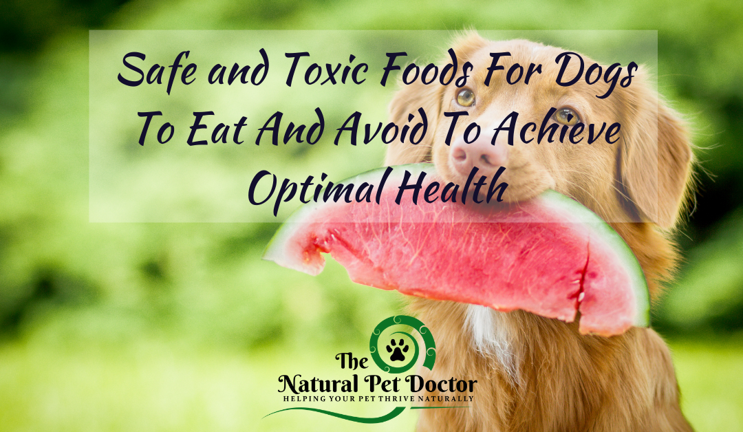 Safe and Toxic Foods For Dogs To Eat And Avoid To Achieve Optimal Health
