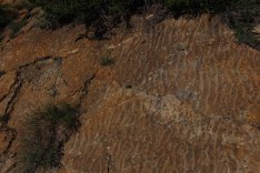 Lithified petrified ripple marks from the shore of the ancient Western Interior Cretaceous Seaway preserved at Dinosaur Ridge in Colorado Photo Credit Zack Neher