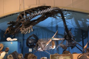 Mounted skeletons of Archelon ischyros Elasmosaurus and other extinct sea monsters on display at the Black Hills Institute of Geological Research, Inc. in South Dakota with Mikaila Bloomfield Seamus Kieran and Emily Barber Photo Credit Zack Neher