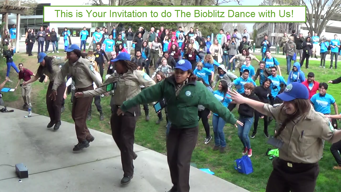 Your BioBlitz Dance Invitation