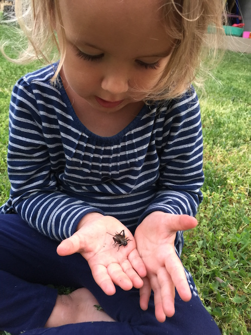 Keeping Crickets as Pets and Reading Kids Classics