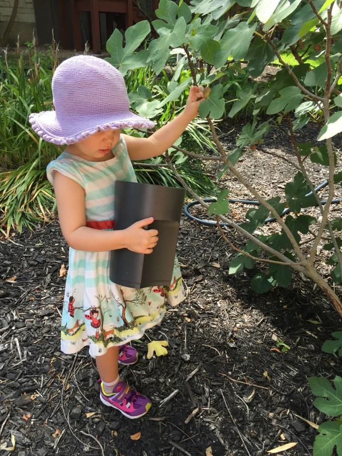 Figs Amelia .jpg