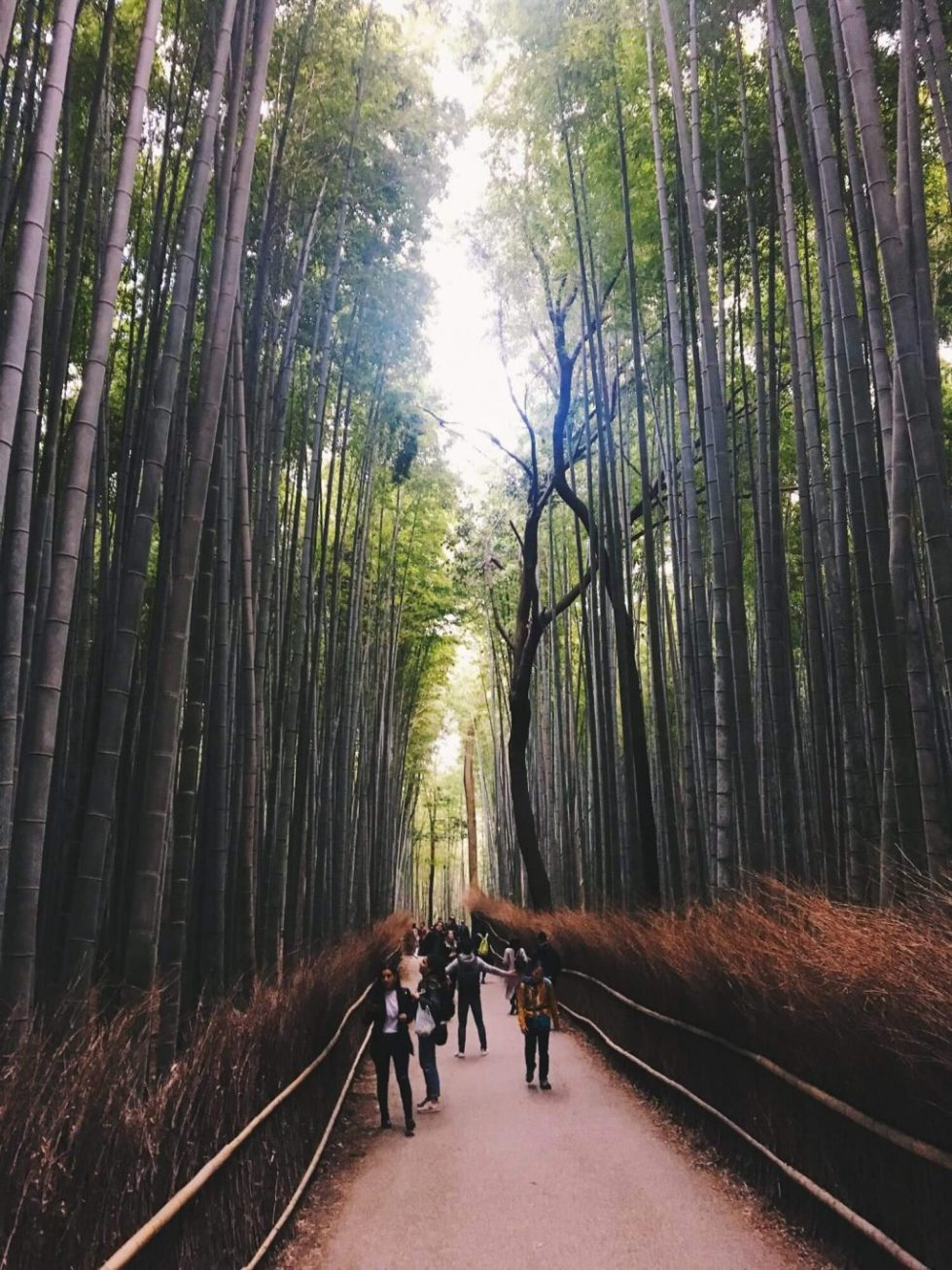 Arashiyama Bamboo Grove kyoto travel tips, what to do in kyoto