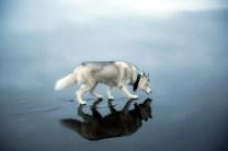 Dog_ice7