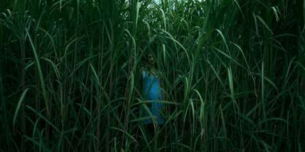 Stephen King - Nell'erba alta