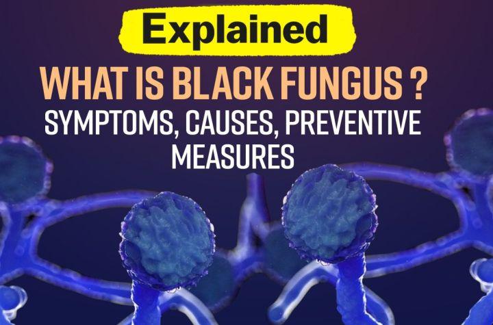 mucormycosis fungus
