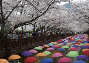 Jinhae, South Korea
